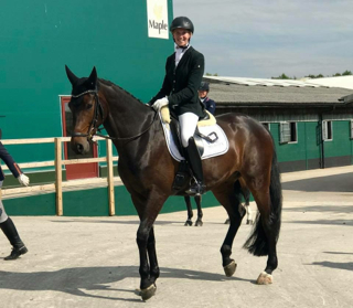 Waverley Dante qualifies for the Shearwater Young Horse semi