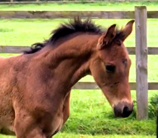 Olympic French rider acquires Waverley foal