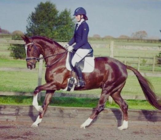 Freya Metters qualifies Waverley Florisgold for BD Winter Re