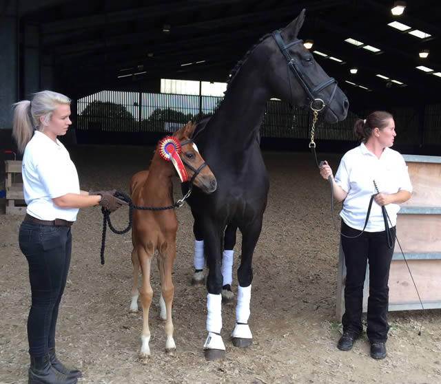 Higher Firsts across the board at BEF for Waverley Horses