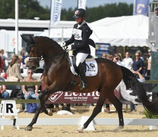 Waverley Fellini places third in the Shearwater Young Horse