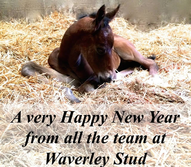 November and December at Waverley Stud