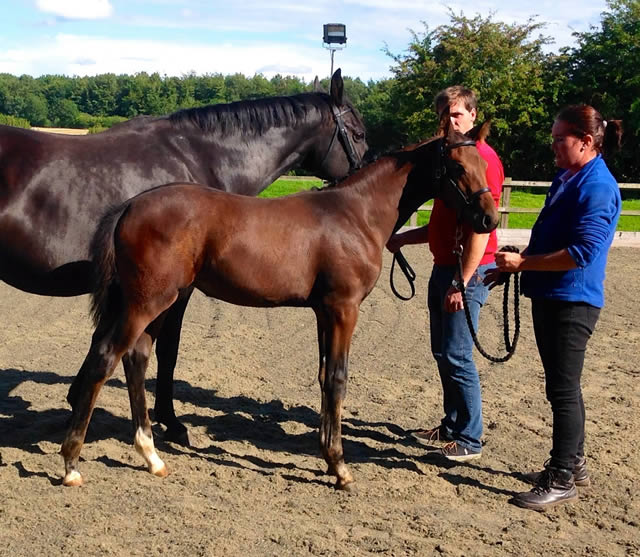 Oldenburg Foal Premiums for every foal shown!
