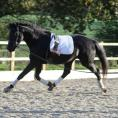 Sundanse at 3 yrs old