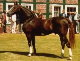 The influential French sire - Furioso II