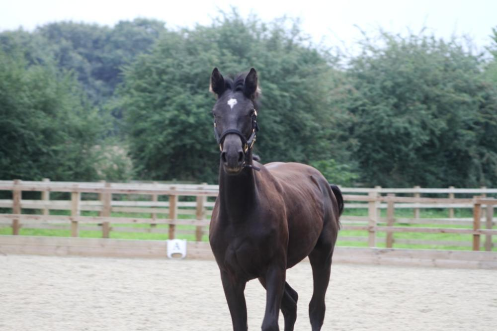 Giselle as a yearling