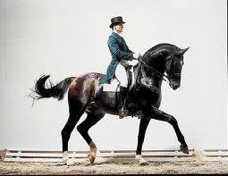 sandro hit stallion